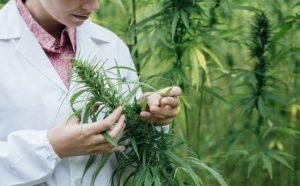 California Weed University