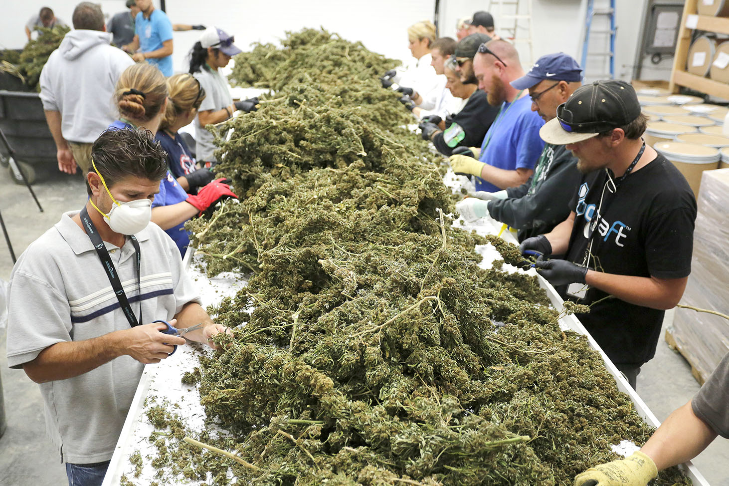 Workshops for marijuana business