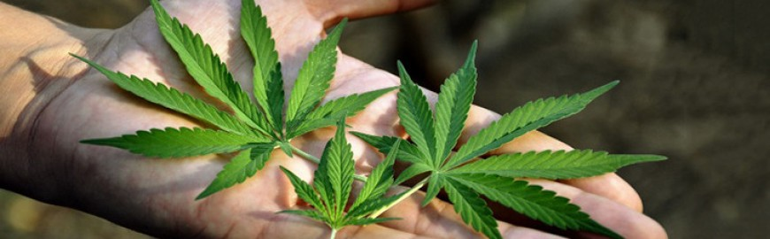 Online cannabis institute