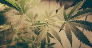 Recreational marijuana business applications