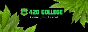 University Marijuana